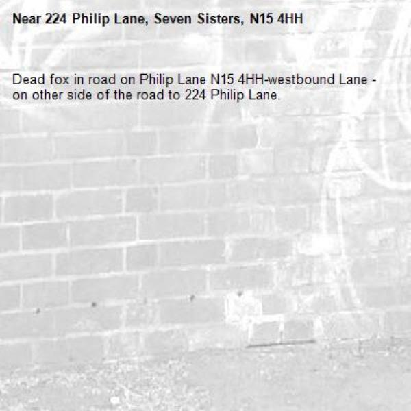 Dead fox in road on Philip Lane N15 4HH-westbound Lane - on other side of the road to 224 Philip Lane.-224 Philip Lane, Seven Sisters, N15 4HH