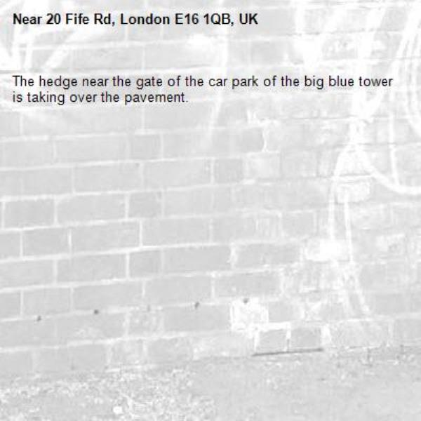 The hedge near the gate of the car park of the big blue tower is taking over the pavement. -20 Fife Rd, London E16 1QB, UK