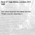 We have removed the dead animal. Thank you for reporting it.-97 High Street, London, E13 0AD