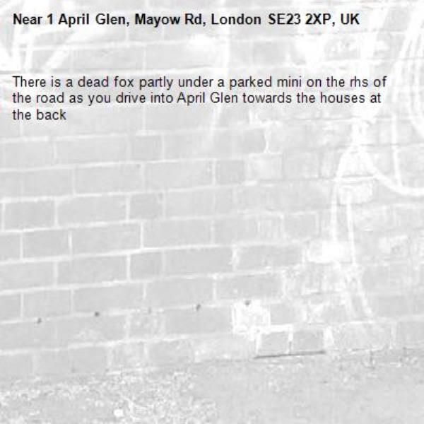 There is a dead fox partly under a parked mini on the rhs of the road as you drive into April Glen towards the houses at the back-1 April Glen, Mayow Rd, London SE23 2XP, UK