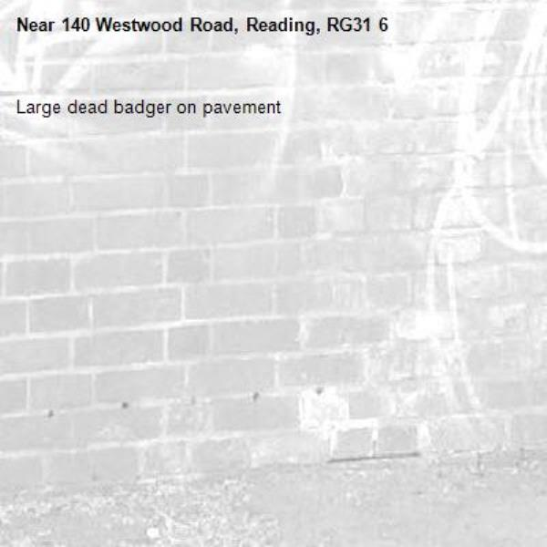 Large dead badger on pavement-140 Westwood Road, Reading, RG31 6