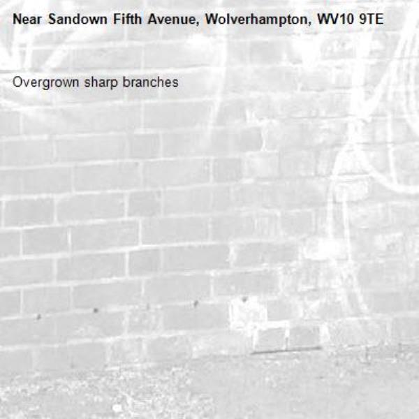 Overgrown sharp branches -Sandown Fifth Avenue, Wolverhampton, WV10 9TE