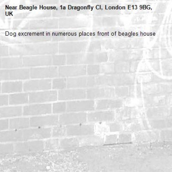 Dog excrement in numerous places front of beagles house-Beagle House, 1a Dragonfly Cl, London E13 9BG, UK