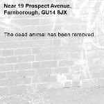 The dead animal has been removed.-19 Prospect Avenue, Farnborough, GU14 8JX