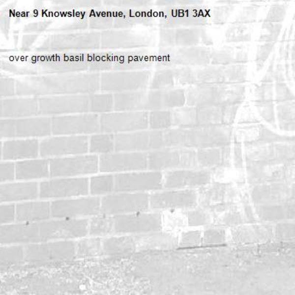 over growth basil blocking pavement -9 Knowsley Avenue, London, UB1 3AX