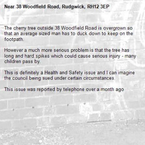 The cherry tree outside 38 Woodfield Road is overgrown so that an average sized man has to duck down to keep on the footpath.