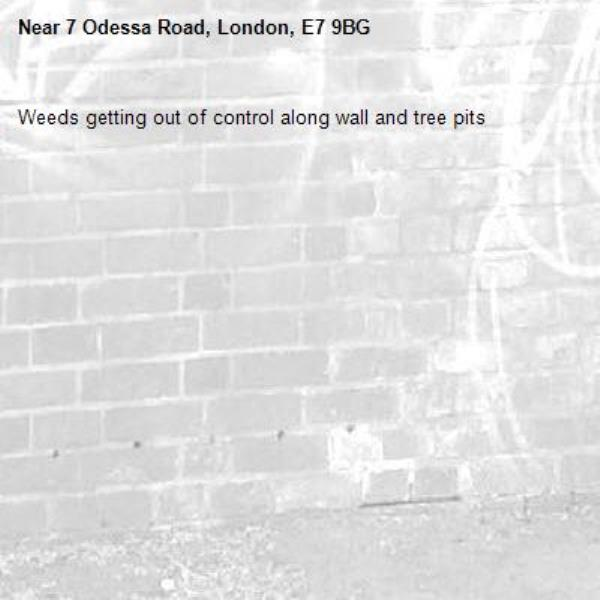 Weeds getting out of control along wall and tree pits -7 Odessa Road, London, E7 9BG