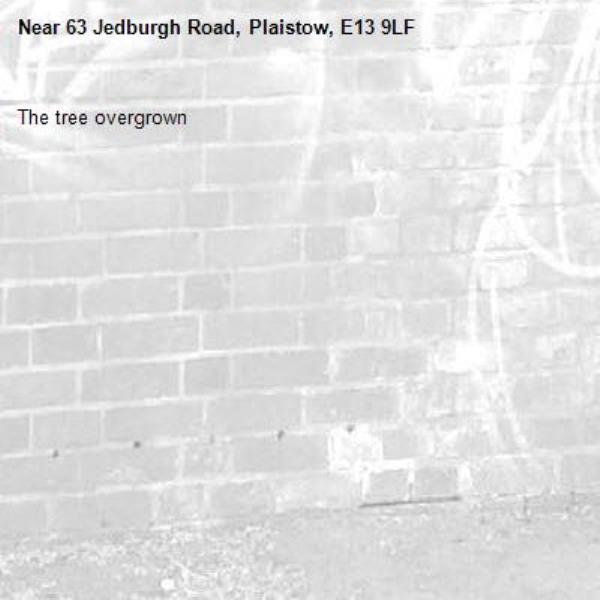 The tree overgrown -63 Jedburgh Road, Plaistow, E13 9LF