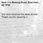 We have removed the dead animal. Thank you for reporting it.-31a Barking Road, East Ham, E6 1PW