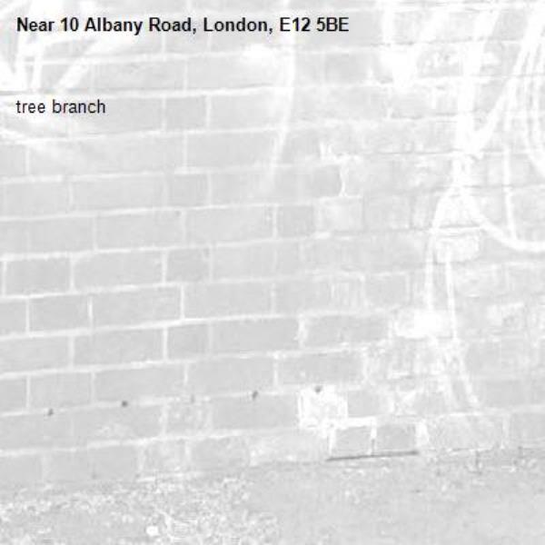 tree branch-10 Albany Road, London, E12 5BE