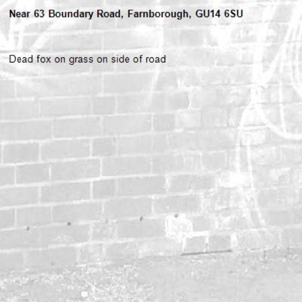 Dead fox on grass on side of road -63 Boundary Road, Farnborough, GU14 6SU