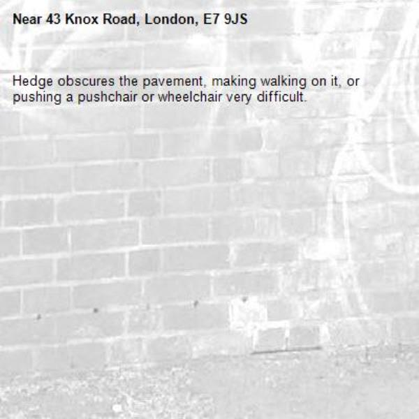 Hedge obscures the pavement, making walking on it, or pushing a pushchair or wheelchair very difficult. -43 Knox Road, London, E7 9JS