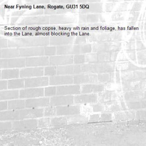 Section of rough copse, heavy wih rain and foliage, has fallen into the Lane, almost blocking the Lane.-Fyning Lane, Rogate, GU31 5DQ