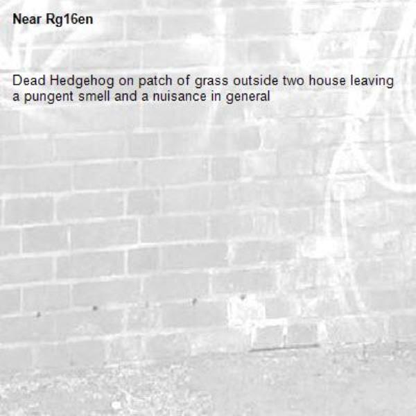 Dead Hedgehog on patch of grass outside two house leaving a pungent smell and a nuisance in general -Rg16en
