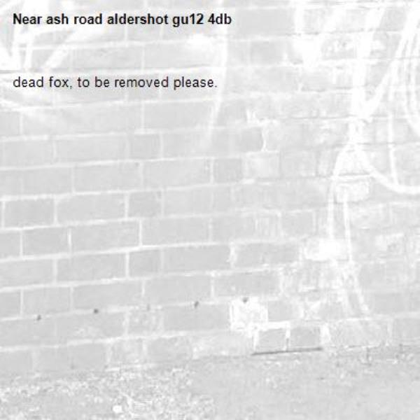 dead fox, to be removed please.-ash road aldershot gu12 4db