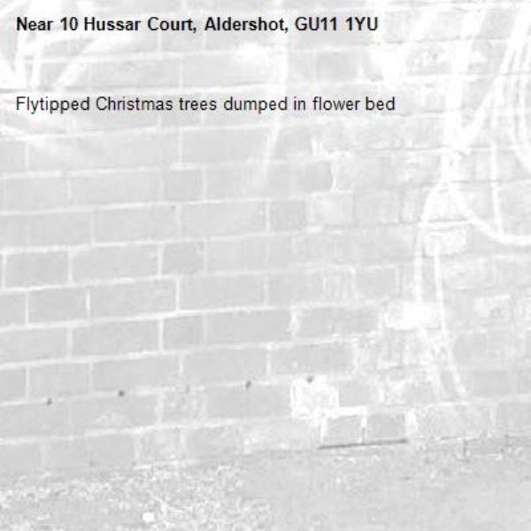 Flytipped Christmas trees dumped in flower bed-10 Hussar Court, Aldershot, GU11 1YU