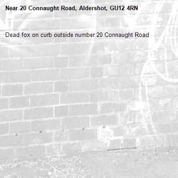 Dead fox on curb outside number 20 Connaught Road -20 Connaught Road, Aldershot, GU12 4RN