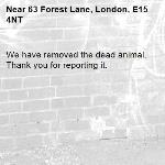 We have removed the dead animal. Thank you for reporting it.-63 Forest Lane, London, E15 4NT
