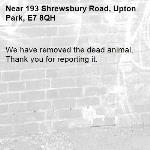 We have removed the dead animal. Thank you for reporting it.-193 Shrewsbury Road, Upton Park, E7 8QH
