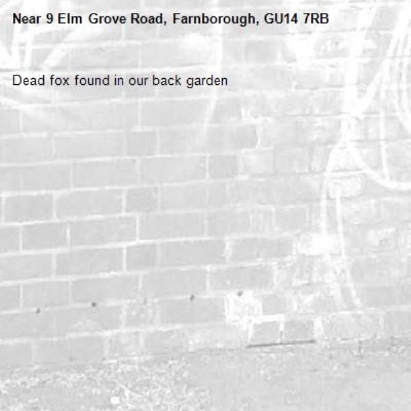 Dead fox found in our back garden-9 Elm Grove Road, Farnborough, GU14 7RB