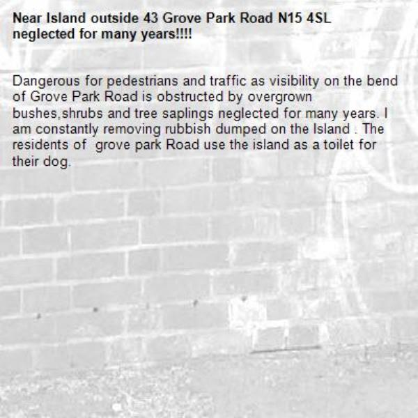 Dangerous for pedestrians and traffic as visibility on the bend of Grove Park Road is obstructed by overgrown bushes,shrubs and tree saplings neglected for many years. I am constantly removing rubbish dumped on the Island . The residents of  grove park Road use the island as a toilet for their dog.-Island outside 43 Grove Park Road N15 4SL neglected for many years!!!!