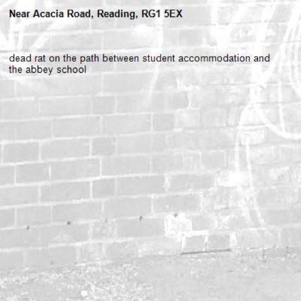 dead rat on the path between student accommodation and the abbey school-Acacia Road, Reading, RG1 5EX