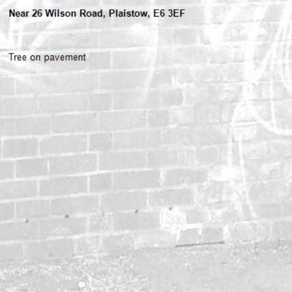 Tree on pavement -26 Wilson Road, Plaistow, E6 3EF
