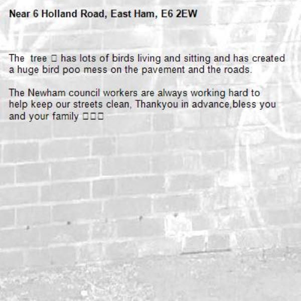 The tree 🌳 has lots of birds living and sitting and has created a huge bird poo mess on the pavement and the roads.  The Newham council workers are always working hard to help keep our streets clean, Thankyou in advance,bless you and your family 😌🙏🏽-6 Holland Road, East Ham, E6 2EW
