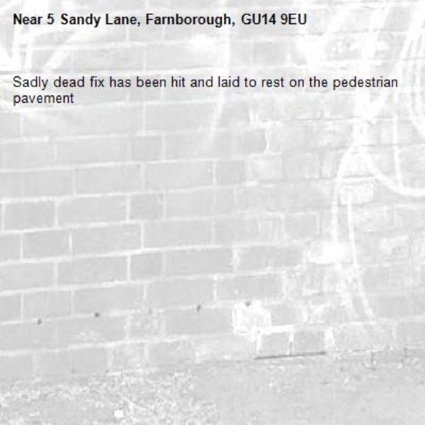 Sadly dead fix has been hit and laid to rest on the pedestrian pavement -5 Sandy Lane, Farnborough, GU14 9EU