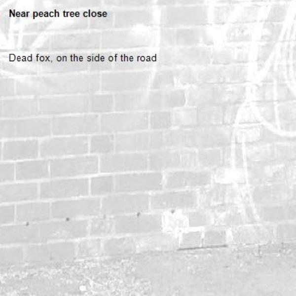 Dead fox, on the side of the road-peach tree close