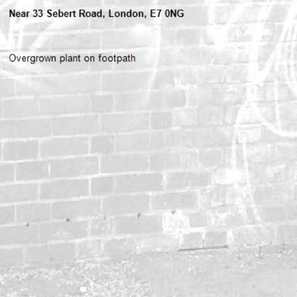 Overgrown plant on footpath -33 Sebert Road, London, E7 0NG