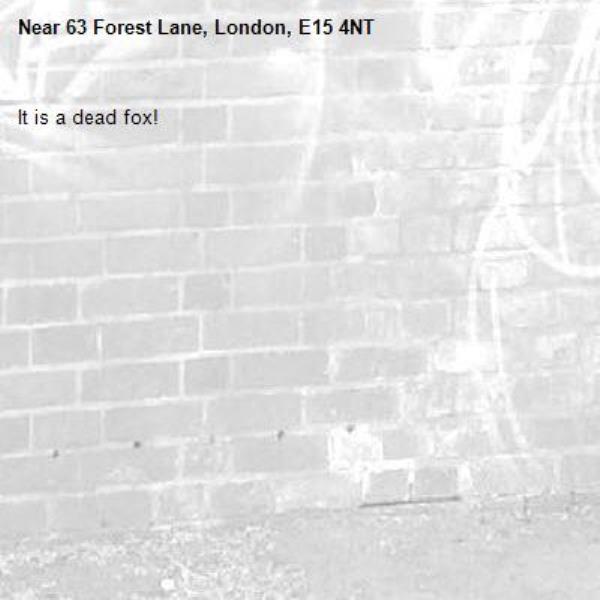 It is a dead fox! -63 Forest Lane, London, E15 4NT