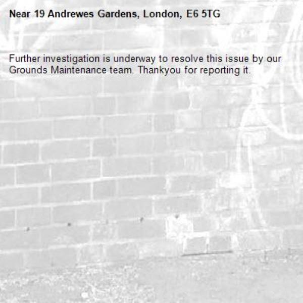 Further investigation is underway to resolve this issue by our Grounds Maintenance team. Thankyou for reporting it.-19 Andrewes Gardens, London, E6 5TG