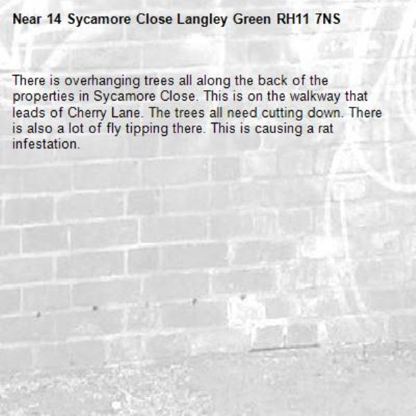 There is overhanging trees all along the back of the properties in Sycamore Close. This is on the walkway that leads of Cherry Lane. The trees all need cutting down. There is also a lot of fly tipping there. This is causing a rat infestation. -14 Sycamore Close Langley Green RH11 7NS